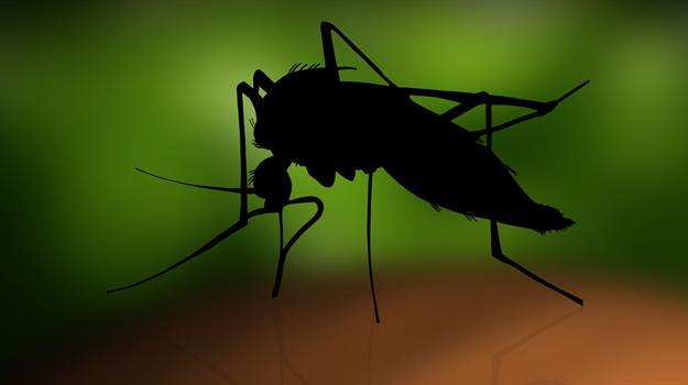 mosquito-zika-virus-lyme-disease-mosquitoes_910798520621
