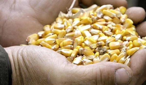 corn-grain-elevator-farming-farm-crops-markets_806161520621