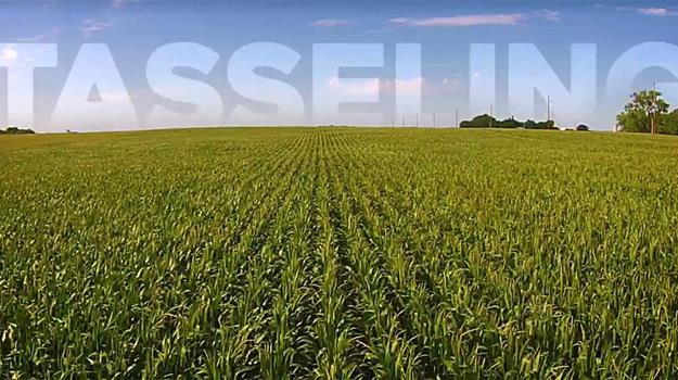 prunty-farms-corn-timelapse-video_853388530621