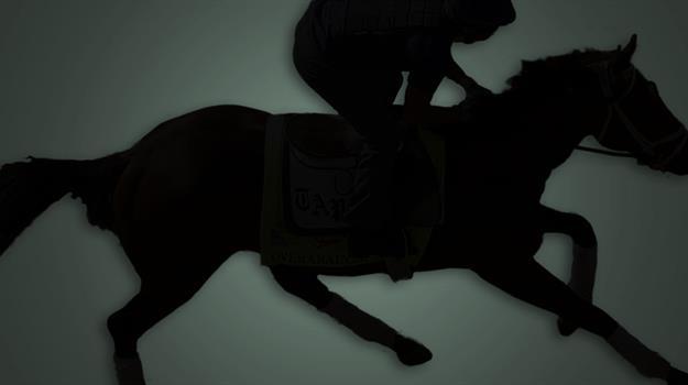 race-horses-racehorse-racehorses_733139520621