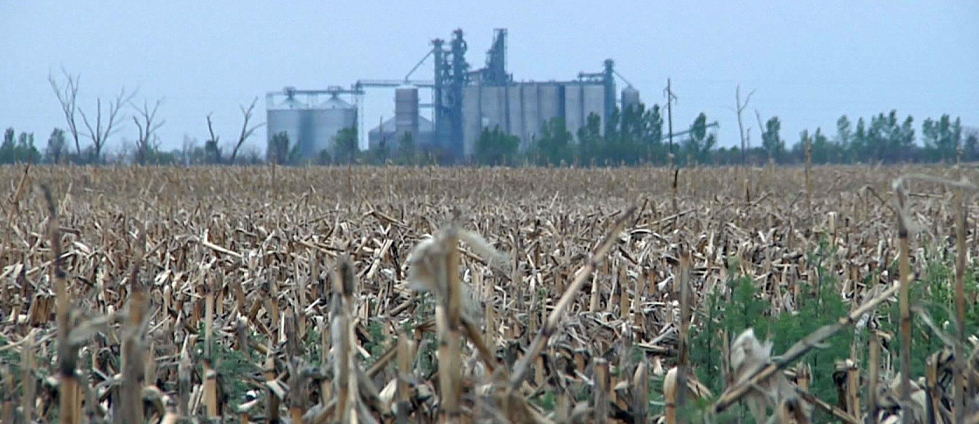 crops farming farmland