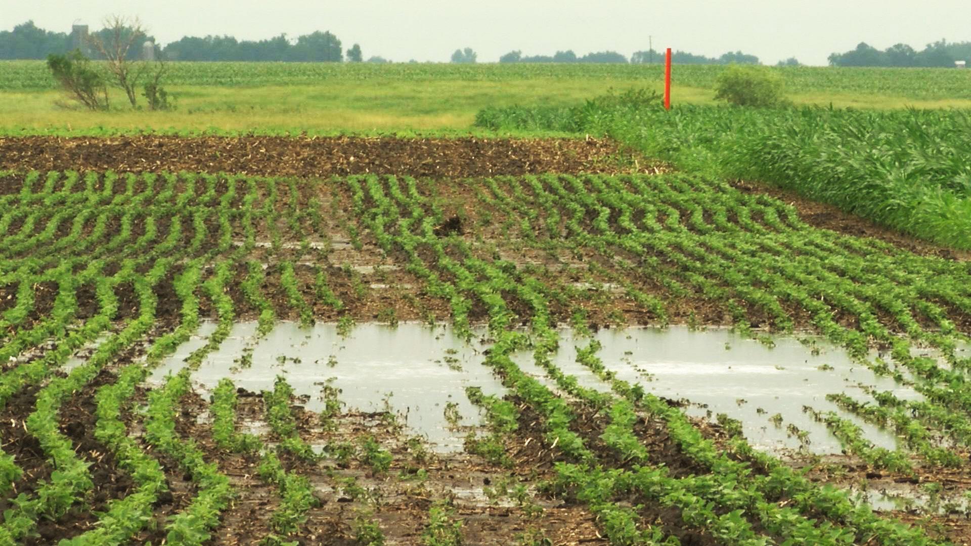 KELO Centerville farmland flooding rain