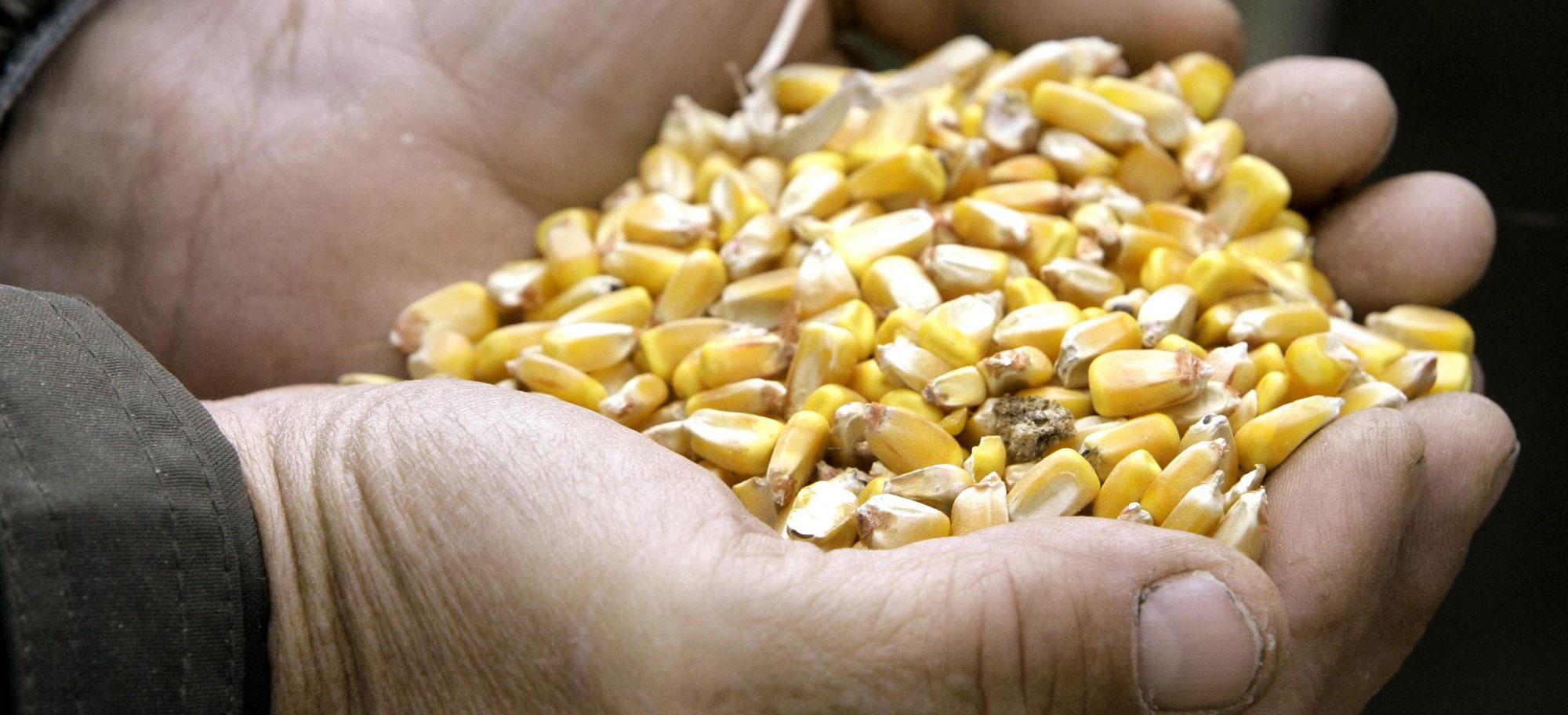 KELO Markets Corn Grain