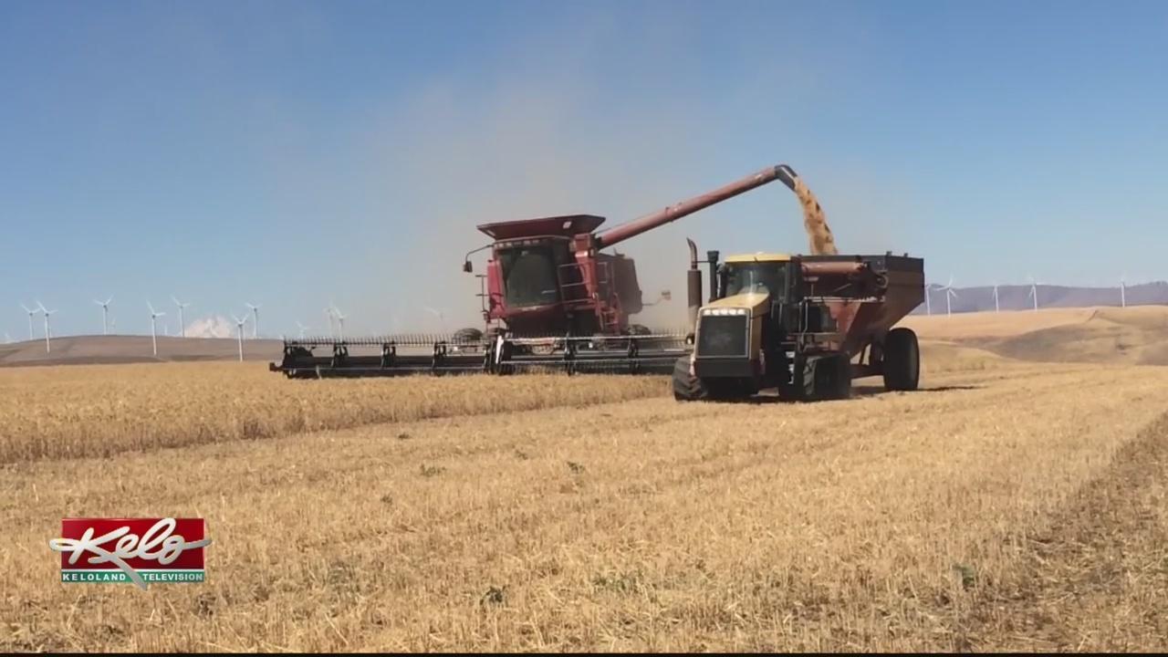 Wheat_Tariffs_Could_Have_Devastating_Aff_0_20180721230933