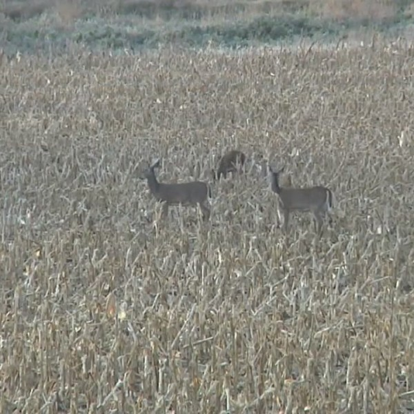 GFP Commission Changes South Dakota's Licensing System For Firearms Deer Seasons