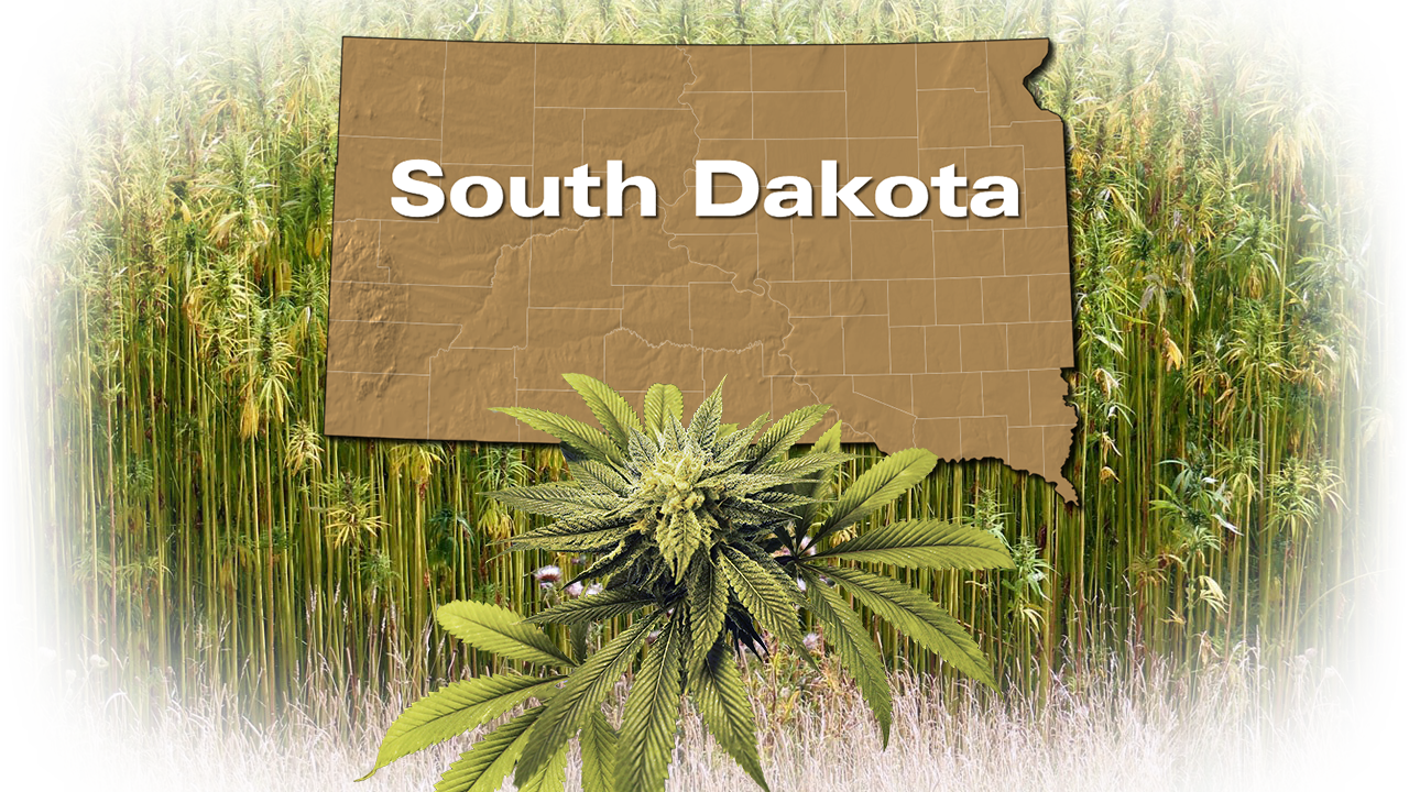 KELO Hemp Crop South Dakota