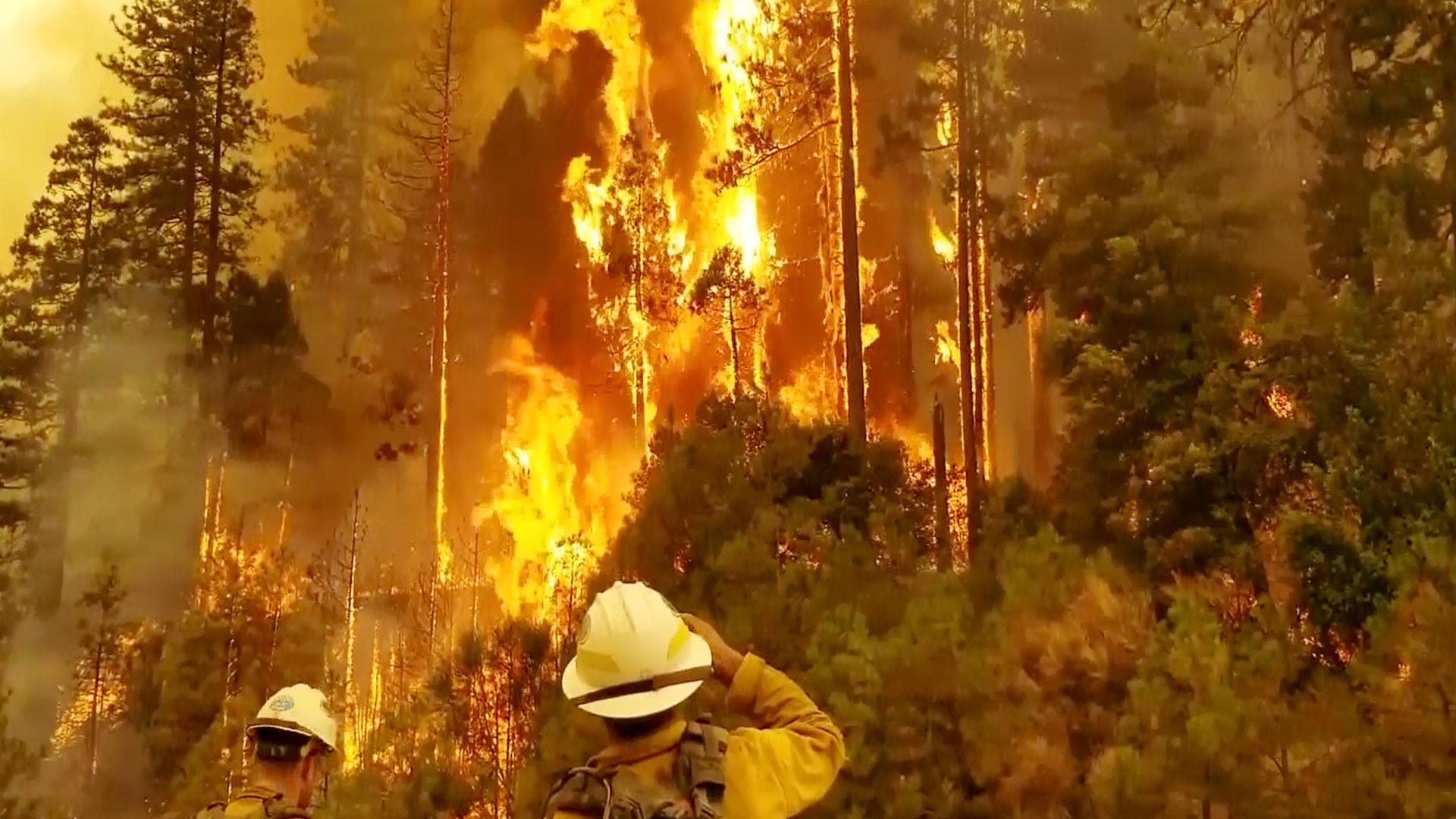 KELO Wildfire