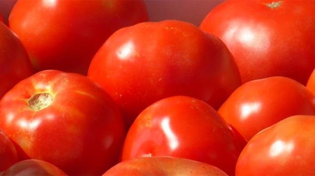 local-produce-locally-grown-produce-locally-sourced-produce-tomatoes-vegetables-diet-foods_983327540621