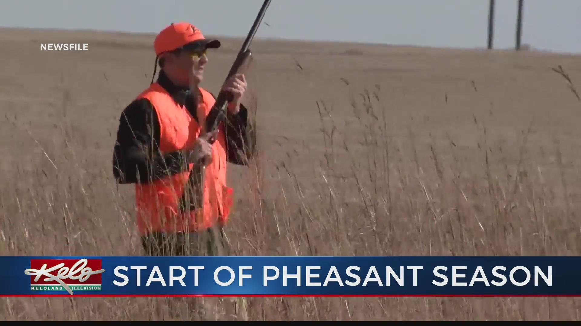 Pheasant hunting open for resident